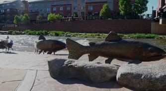 fishattrractions